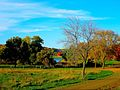 Warner Park during Fall - panoramio (2).jpg