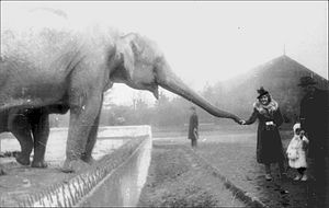 Warsaw Zoo - The zoo in 1938