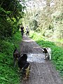 Wendover Arm, Making Friends on the Towpath - geograph.org.uk - 1310469.jpg