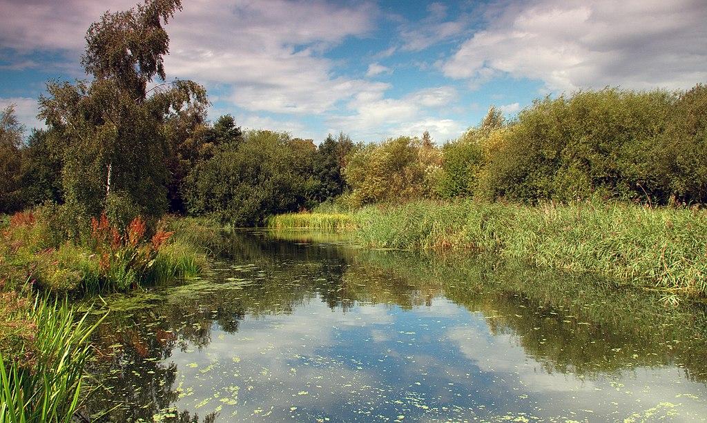 Parc Wetland à Londres : 30 hectares de zones humides. Photo de  Tony Hisgett.