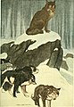 White Fang - To him, in appearance and action and impulse, still clung the Wild.jpg