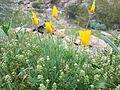 Wildflowers Phoenix.jpg