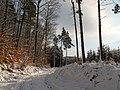 Winter im Teutoburger Wald06.jpg