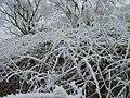 Winterimpressionen-rauhreif-2008-011.jpg