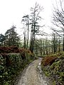 Woodland Track - geograph.org.uk - 625110.jpg