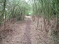 Woodland track - geograph.org.uk - 215109.jpg