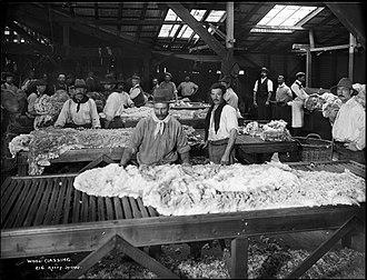 Wool classing - Wool classing in Australia, circa 1900