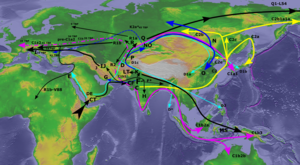 Y-Haplogroup Paleolithic Migrations.png