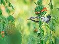 Yala Birds.jpg