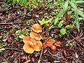 Yukon mushrooms -a.jpg