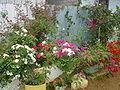 ZUMAR venta de flores 3.JPG