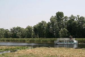 Zasavica (bog) - Image: Zasavica (3)