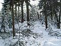 Zittauer Gebirge - Hohlsteinweg - panoramio.jpg