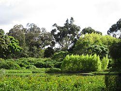 Árboles en Bogotá - Humedal de Córdoba Vegetación.JPG