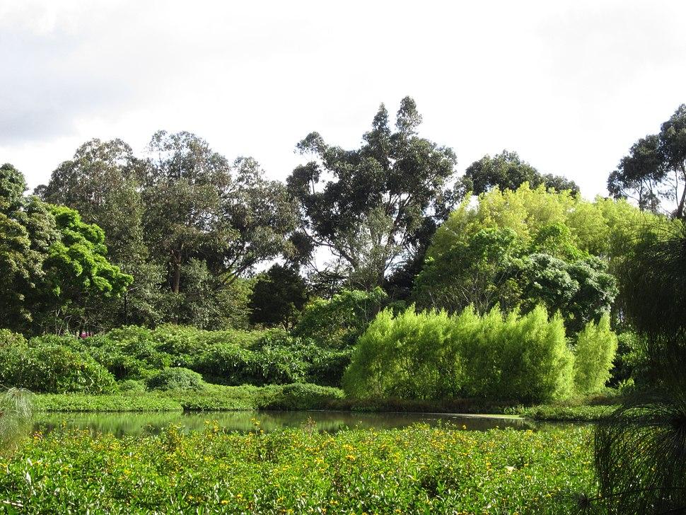 Árboles en Bogotá - Humedal de Córdoba Vegetación