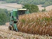 Récolte de maïs à Epône