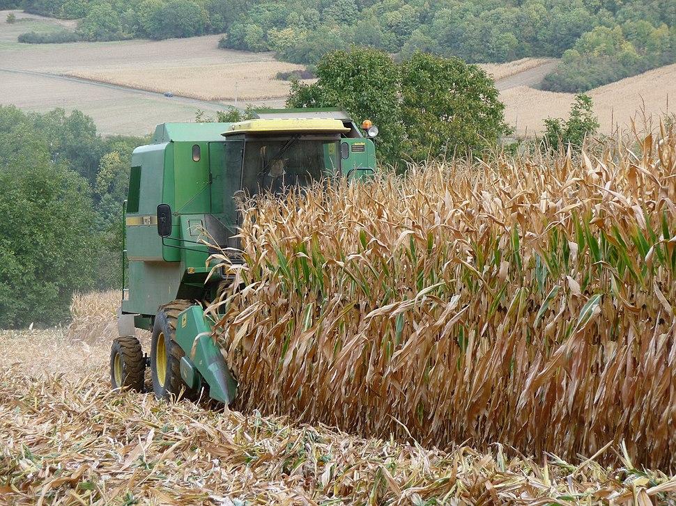 Épône - récolte du maïs01