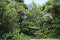 Δάσος Καλόγριας 25.jpg