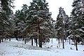 Зима в парке - panoramio - Дмитрий Мозжухин (1).jpg