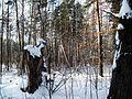 Липецк. - panoramio.jpg
