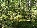 Медвежий край. - panoramio.jpg