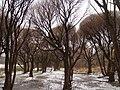 Облетела листва - panoramio.jpg