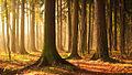 Осенний лес Лосиного Острова.jpg