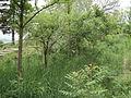 Парк шума Гази Баба во мај (125).JPG