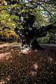 Плана - ЗЗ по директивата за местообитанията – ZZ1307 – вековното дърво до връх Манастирище - No1.jpg