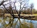 Пойменный ивняк по правому берегу реки Яузы выше пр. Дежнева (ивняк в правобережной пойме р. Яузы выше пр. Дежнева) 04.jpg