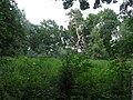 Полчаниновский приусадебный парк, вековые деревья.jpg