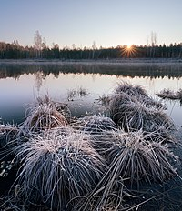 Світанок на болоті.jpg