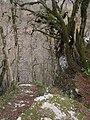 Тисо-самшитовая роща (скальные обрывы),1 км от Хосты вверх по течению реки, Хостинский район, Сочи, Краснодарский край.jpg