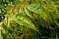 טיפות גשם על צמחים (5).JPG