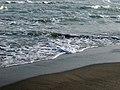 انرژی موج، ساحل دریای خزر، ساحل محمود آباد 05.jpg