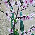 نبتة اللوز.jpg