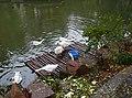 三好坞的鹅 - panoramio.jpg