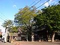 二子神社・むくのき(川崎市まちの樹50選) - panoramio.jpg