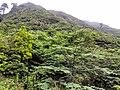 惠州博罗红花嶂越野穿越-大救援20140524-25 - panoramio (9).jpg
