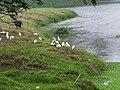 新莊埤濕地 Xinzhuangpi Wetland - panoramio (1).jpg