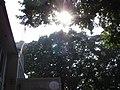 榕樹下 - panoramio.jpg