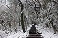 陽明山降雪 01.jpg