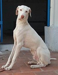 02. Bheem the male rajapalayam.jpg