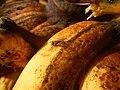 0495Common houseflies eating bananas in the Philippines 16.jpg