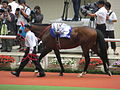 05 Silport (June 23, 2013. 54th Takarazuka Kinen) (9117531458).jpg