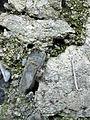 076 Roques vora la mina Grott, Vallvidrera.jpg