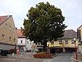 1163 Sommerlinde Köflach.JPG