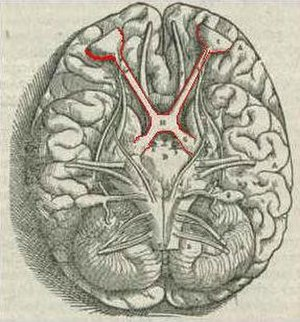 Science - Galen (129–c. 216) noted the optic chiasm is X-shaped. (Engraving from Vesalius, 1543)