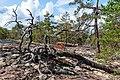 18-09-01-Schären westlich von Långbådan RRK7714.jpg