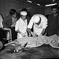 18.05.76 à l'école vétérinaire de Toulouse, opération d'un brocard jeune cerf (1976) - 53Fi908.jpg